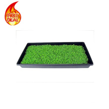 PT-0013 Vacuum Forming Large Plastic Seed Tray Factory