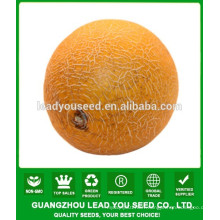 NSM13 Leisi Hybrid quality musk melon seeds for sale