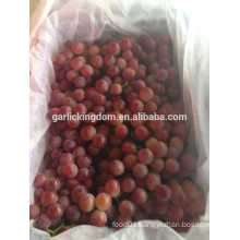 sell Yunnan grapes/Fresh red grapes/Best fresh red grapes