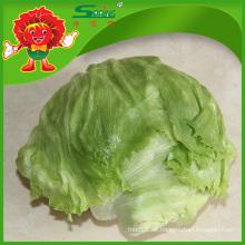 Yunnan frisches Obst und Gemüse Bio-Salat