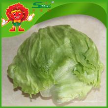 Yunnan Fruits et légumes frais Laitue organique