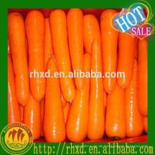 Chinesische frische Baby Karotten niedrigen Preis für den Export