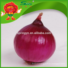 Fresh onions/Fresh yellow onion wholesale