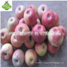 Pomme qinguan en haute qualité