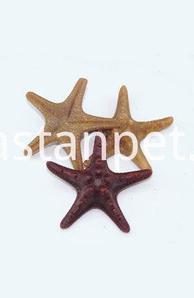 dental starfish