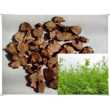 Natural Fagopyrum Dibotrys/ Cymose Buckwheat Rhizome 10: 1 Root Extract Powder