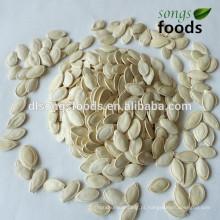 Comprar novas sementes de abóbora Shineskin Crop