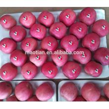 Yantai Fresh Red Fuji Apfel Ernte 2016