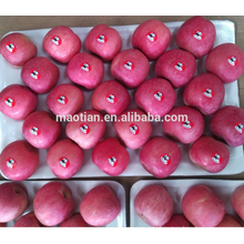 Yantai Fresh Red Fuji Apple 2016 crop