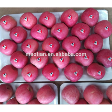 Yantai Fresh Red Fuji Apple cosecha 2016
