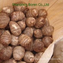 Chinese Taro From Shandong Boren