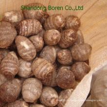 Китайский таро из Шаньдун Борен