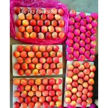 Honey Fuji Plastic-bagged Fuji Apple