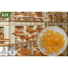 Kingherbs's 100% Natural Reishi Spore Oil Softgel (sans additifs ni porteurs)