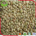 2016 New Crop Green Lentils
