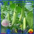 High Quality Best price Chlorine Dioxide Powder for Agriculture