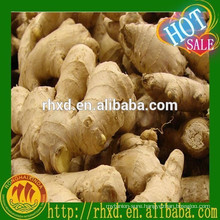 new product dried or fresh Chinese mature ginger with good price