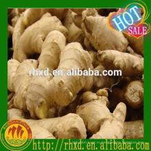новый продукт сушеный или свежий китайский зрелый имбирь с хорошим ценой