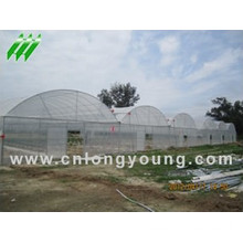 Plastic Film Multi-Span Greenhouse