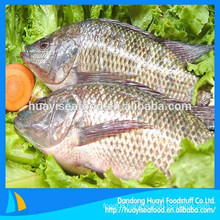 all kinds of frozen high quality tilapia fish promotion in the market