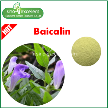 Extrait naturel de scutellaire Baical Baicalin