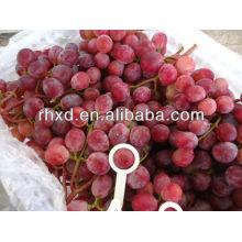 Honti grapes