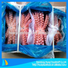 top sale frozen fresh various octopus Octopus Vulgaris