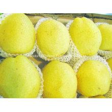 Chinese Good Quality Fresh Ya Pear