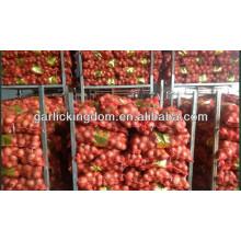 Nueva cebolla roja fresca / 20kg cebolla fresca / cebolla amarilla para la venta