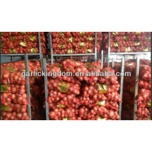fresh red onion new corp/20kg fresh onion/yellow onion for sale