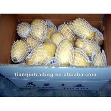 supply potato