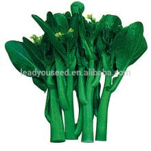 CS06 Dazhong 100 jours de maturité tardive choy sum graines, graines de chine