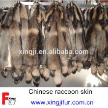 Peau de chien raton laveur habillé chinois