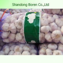 Wholesale Size 5.0-5.5cm Normal White Fresh Garlic