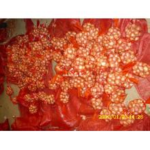 Golden Supplier Acerca de Shallot (9 cm y más)