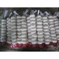 Marché jordanien Vente chaude Normal Blanc Ail frais