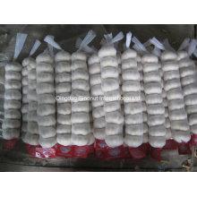 Jordanischer Markt Heiße Verkäufe Normaler weißer frischer Knoblauch