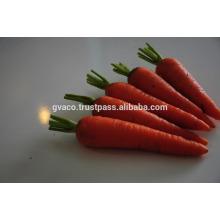 Exporter 2017 new fresh carrot from Vietnam
