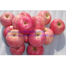 China Top Quality New Crop FUJI Apple Carton Packing