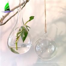 Vase de culture hydroponique en verre