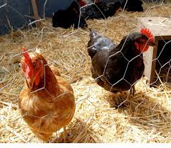 Hexagonal Chicken Quality Wire