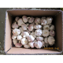Mesh Bag Packing 5.5cm Fresh Normal White Garlic
