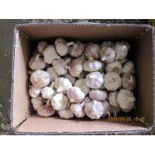 2015 низким 5.0 см обычный Белый чеснок