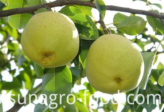 Organic Golden Crown Pear