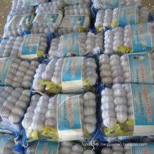 Haute qualité de l'ail blanc frais chinois dans un petit paquet