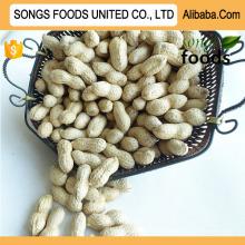 Seaflower Variety Peanut Songs Foods