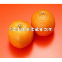 Neue Bulk-Valencia-Orangen exportieren nach Bangladesch