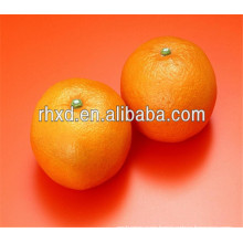 new bulk valencia oranges export to Bangladesh