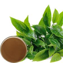 Extrait de thé vert pur en poudre