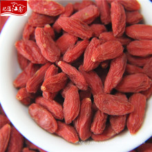 Ningxia 2017 wholesale fruit goji